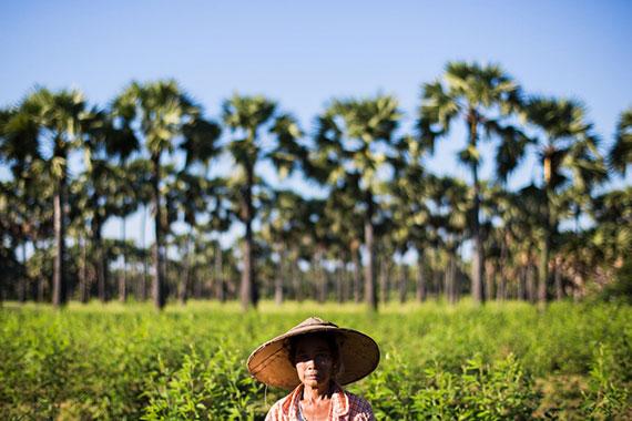 Burmese woman in a field