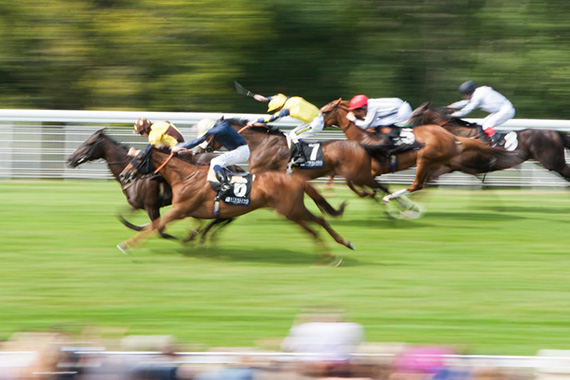 horse race photography