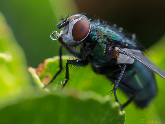photography tips for macro