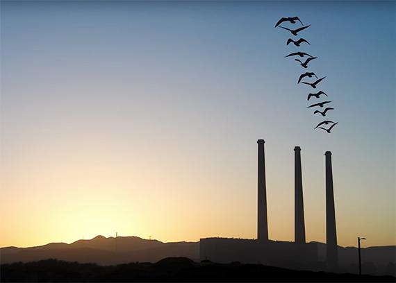 silhouette birds in motion