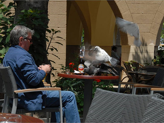 pigeons stealing food
