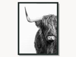 Highland Cattle Black & White Portrait Framed Print