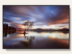 One Calm Tree Framed Print by Rob Dickinson