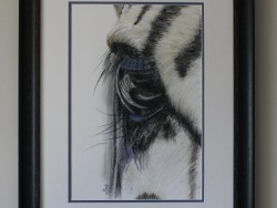 Zebra Eye Framed Limited Edition Print