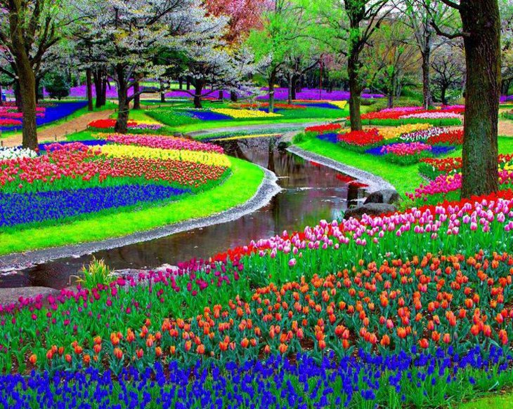 World Largest Flower Garden - Netherlands (9)