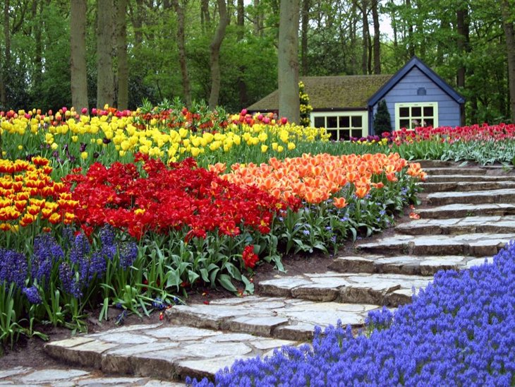 World Largest Flower Garden - Netherlands (10)