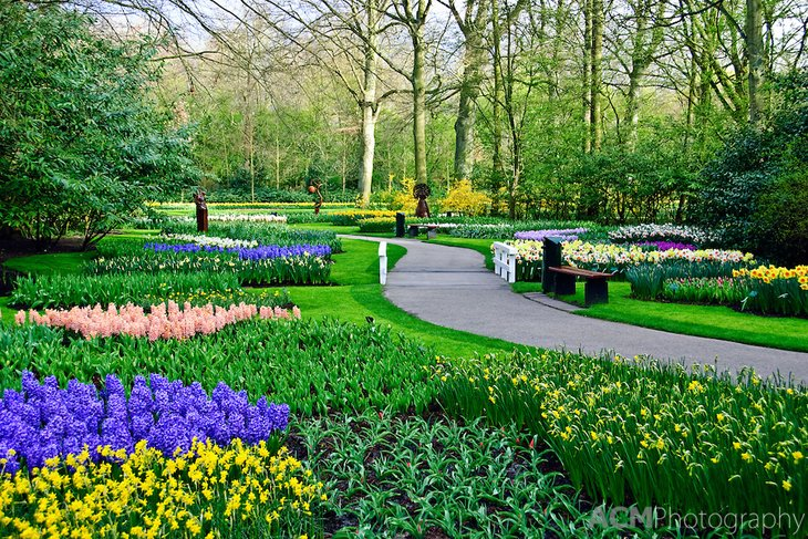 World Largest Flower Garden - Netherlands (2)