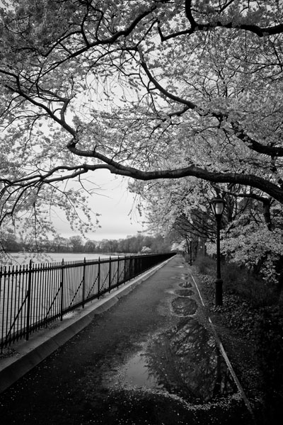 Jackie Onassis Central Park Black and White