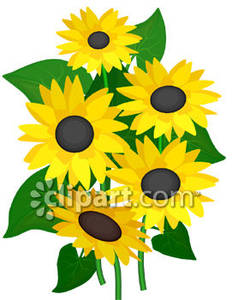 group of yellow sunflowers