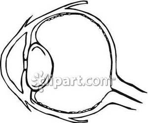 human eye diagram simple car crossover wiring for kids photo 22