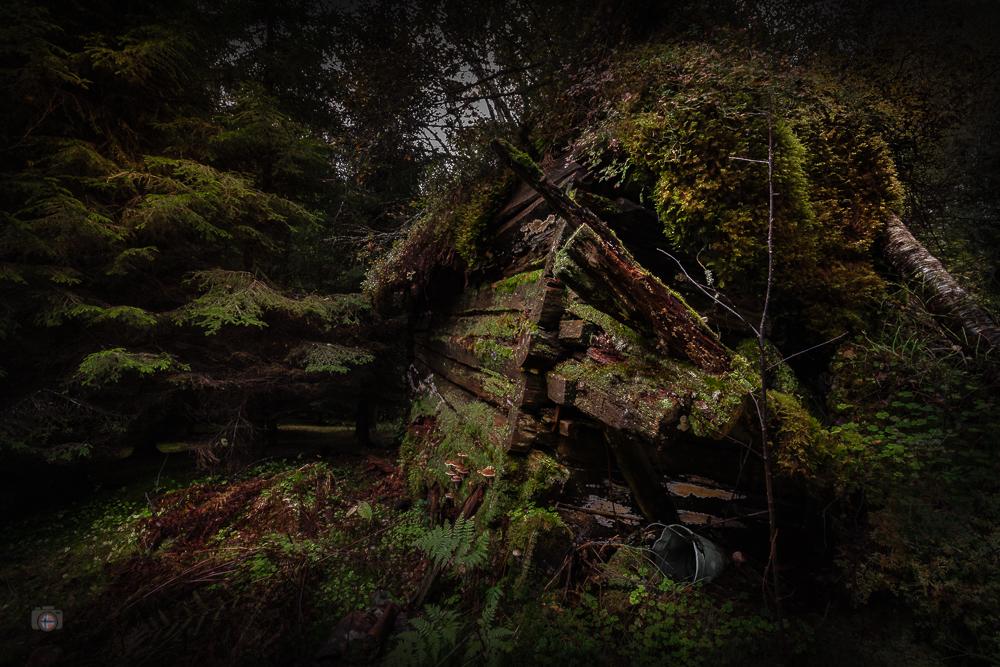 Im dunklen Wald