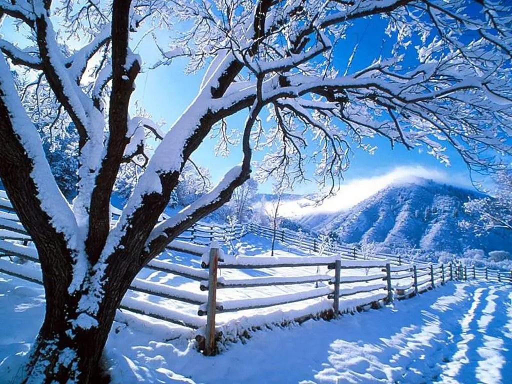 Snowy path in wintertime
