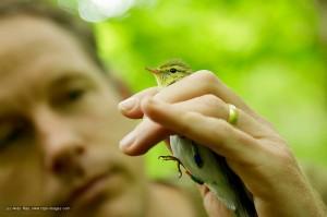 RSPB Wood Warbler Project