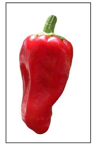 Aleppo Pepper Plant For Sale Online Piedmont Farm  Garden