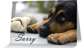 Sorry Dog 2