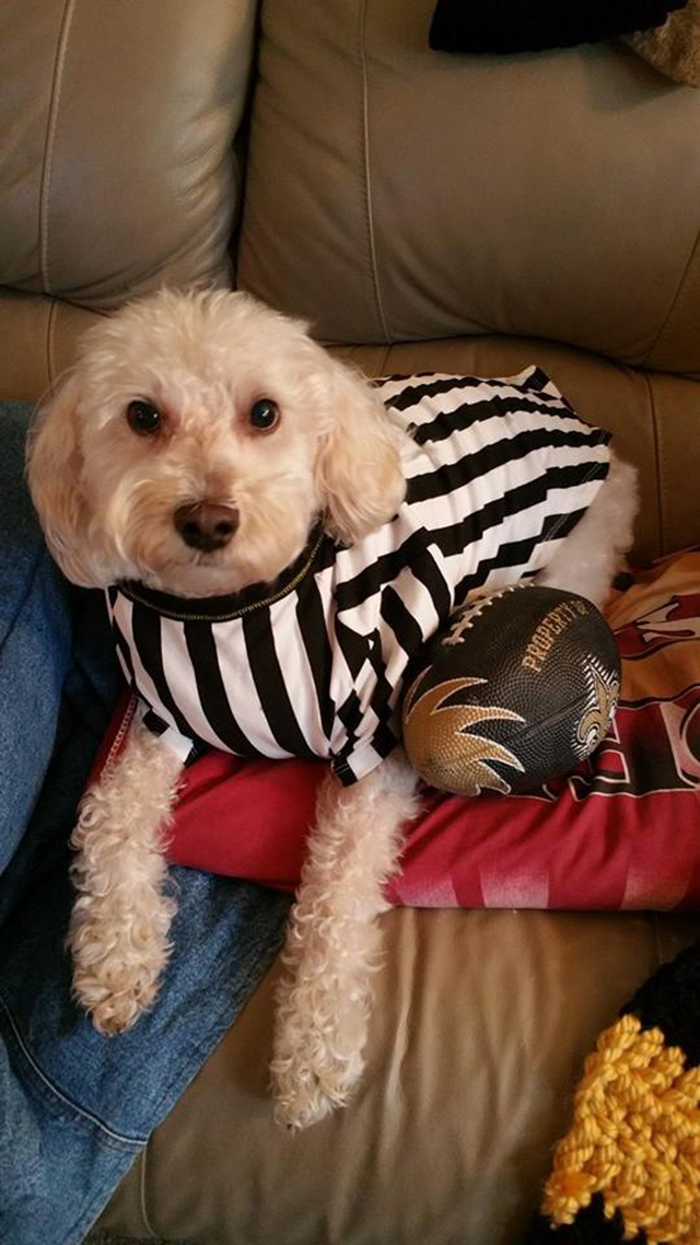 While we receive compensation when you click links to pa. Jasper Zurich Halloween 2014 | Pierce Schnoodles