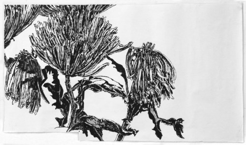 "Dawn Clements - ""Chrysanthemums 2 (black ink),"" 2014, Sumi ink on paper, 18 x 31.5 inches"
