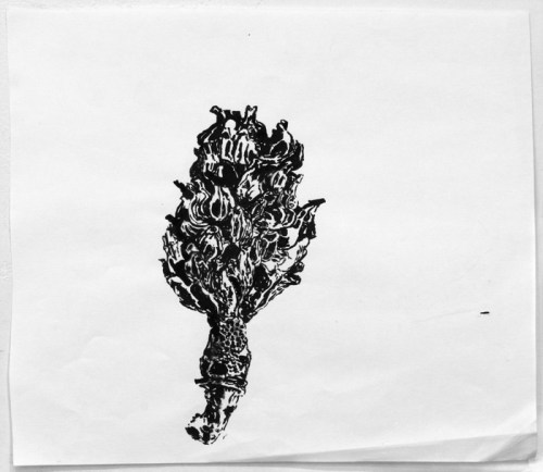 Magnolia Seed Pod - 2008, Sumi ink on paper, 11 x 12 inches