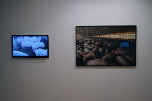 Miru Kim - Installation Shot