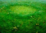 Detail: Fairy Ring With Dandelions