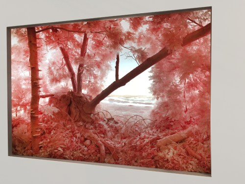 """no title - Installation view: Patrick Jacobs, """"Pink Forest,"""" 2018 The Armory Show, Booth 727"""