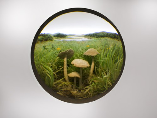 Small Fairy Ring Mushroom Cluster - 2011, Paper, acrylic, extruded styrene, copper acrylic gel medium, hair, steel, acrylite, tin, lighting, BK7 glass; 2-inch exposed lens; Interior box dimensions: approximately 14.25 x 10.5 x 10 inches