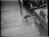 "Dog Shitting on Sidewalk - Still from video ""Atlantic in Brooklyn,"" 1971-72. Collection of the artist."