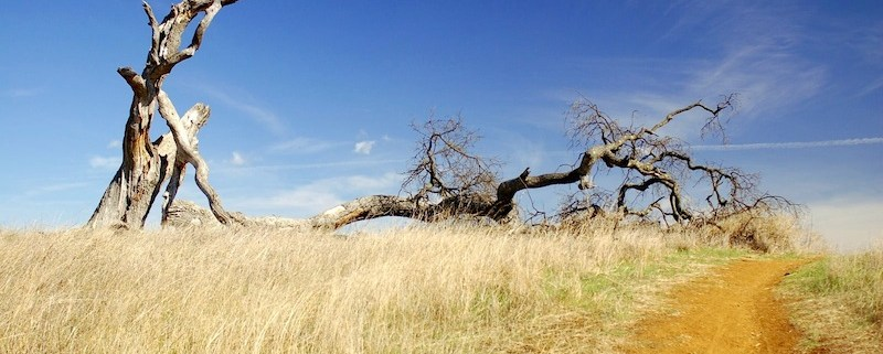 Dead Tree - Photo by f_lopiano - http://flic.kr/p/3x9syK