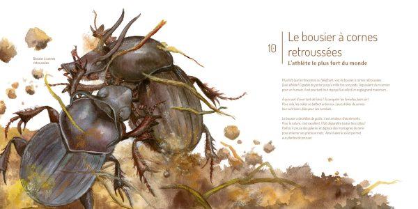 Les_Insectes_int2_Editions_du_Ricochet