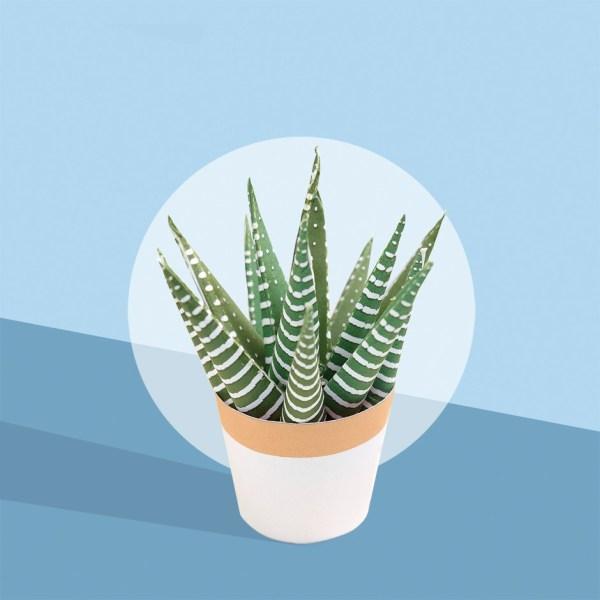 les-pgetits-cactus