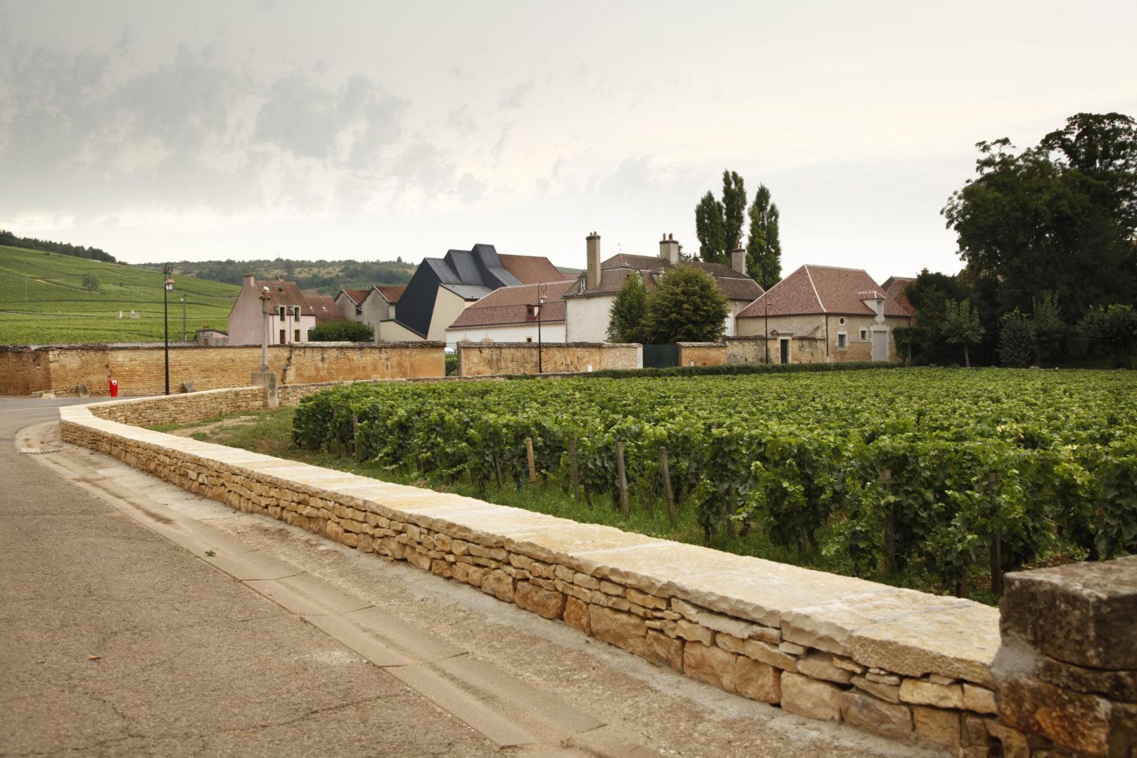 Murs de vignes – Vosne-Romanée (21)