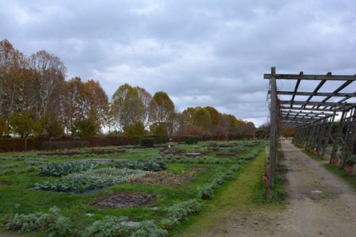potager royal venaria