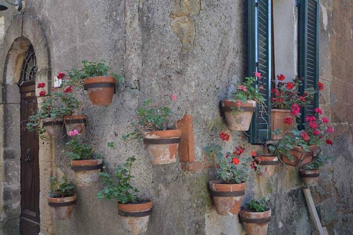 fiori dettagli sorano