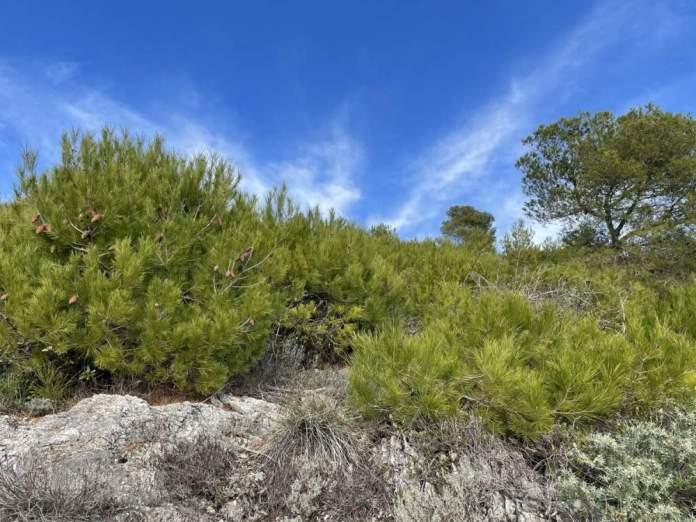 macchia mediterranea bergeggi