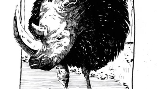 rinocestruzzo