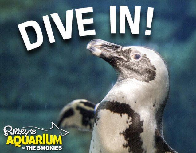 Ripleys Aquarium - Gatlinburg, TN