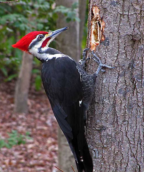 Woodpecker Deterrent Kit  Pigeon Patrol Canada  Bird Control Products  Services