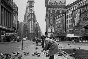 pigeon feeding war