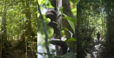 Rando forêt