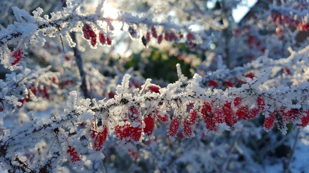 Näin autat pihasi kasveja selviämään talvesta