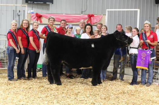 Market Steer, Feeder Calf, All Animal & Outstanding Market Results