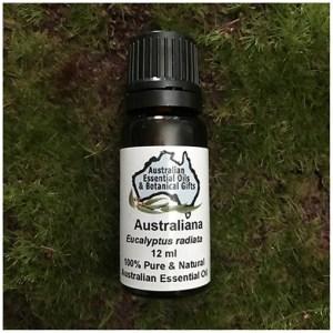 eucalyptus australia