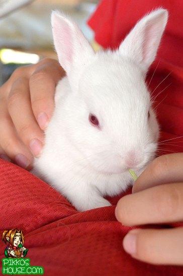 Buddy Holding Bunny