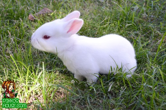 Baby Bunny Sniffing in the Grass