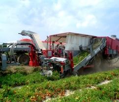 190 Tomato Harvester-1