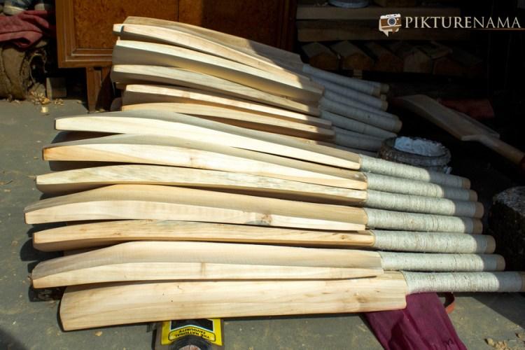 Kashmir willow bat in abundance