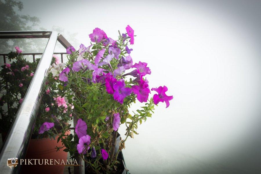 Margaret's deck tea Lounge Kurseong orchids