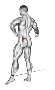 Glut Minimus Muscle