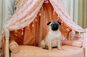 """Um dos cães de Marie Antoinette (dal film """"Marie Antoinette""""). A rainha da França amava os animais"""