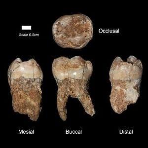 I denti fossili trovati in Israele, contenenti le più antiche tracce di inquinamento finora rinvenute